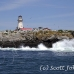 lighthouse_island_seal_machias_h_2224_can1342.jpg