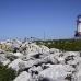 lighthouse_island_seal_machias_h_3040_can1689.jpg